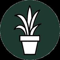 Plant in pot icon