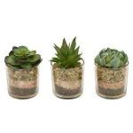 Succulent Green W/pot - 3 Asst
