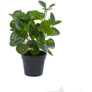 Artificial Peperomia Leaf in Pot