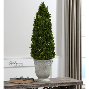 Boxwood, Cone Topiary