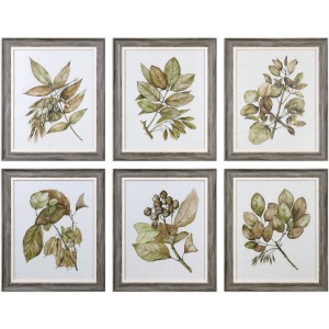 Seedlings Framed Prints S/6