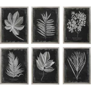 Foliage Framed Prints S/6