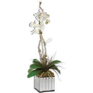 Kaleama White Orchids