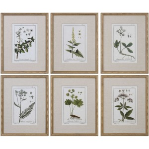Green Floral Botanical Study Framed Prints S/6