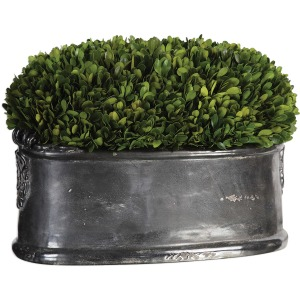 Preserved Boxwood Dome Centerpiece