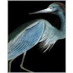 Stately Heron 1