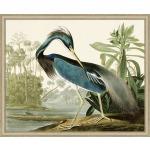 Audubons Blue Heron 1