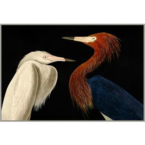 Audubon Conversation