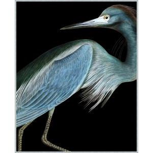 Stately Heron 1