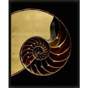 Golden Nautilus 2