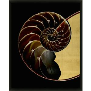 Golden Nautilus 1