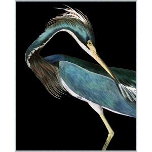 Stately Heron 2