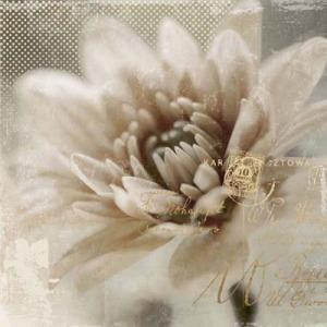 Blooming Softly II
